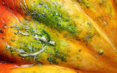 Narben – Pflege mit ätherischen und fetten Ölen